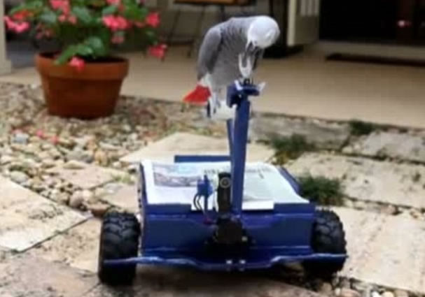 Graduate Builds His Parrot A Beak-Controlled Car (Video)