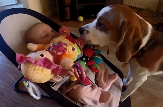 Guilty Dog Showers Crying Baby With Gifts