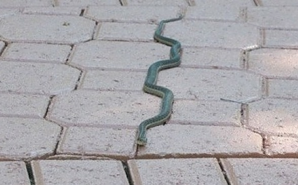 An Unusual Snake