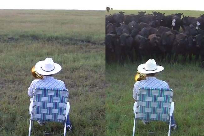This Guy Plays Music To His Cows – They Seem To Love It