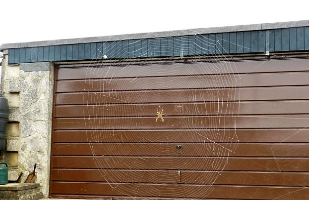 Have You Ever Seen A 6ft Wide Spider Web?