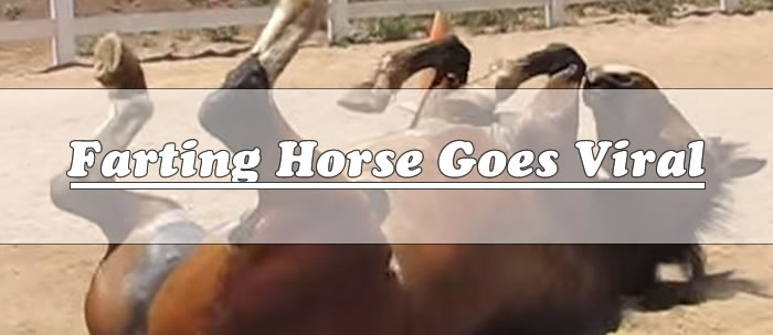 farting-horse-goes-viral