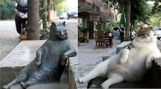 Cat In Istanbul Is Honoured With A Statue